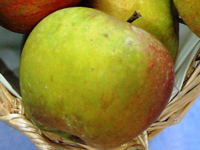 cox orange appels